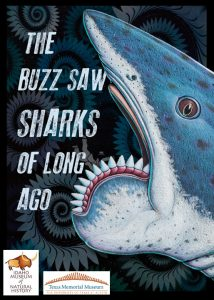 The Buzz Saw Sharks of Long Ago