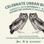 Celebrate Urban Birds!