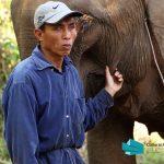 One Million Elephants