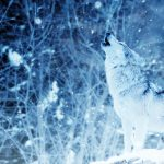 Austin Chamber Ensemble presents Lone Wild Wolf
