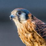 Nature Nights: Birds of Prey & Reptiles