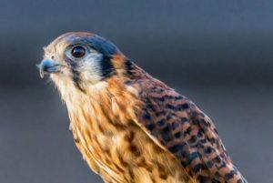 Nature Nights: Birds of Prey & Reptiles