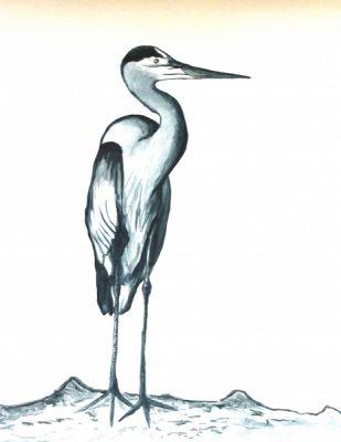 Bird Nerds with Adrienne Hodge