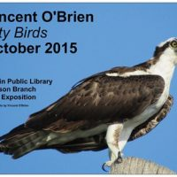 City Birds - photographs from a year of birding local parks by Vincent O'Brien