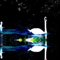 COTFG: Benton Roark+Jeanne Stern, Jesse Beaman(My Empty Phantom), Dimmer Twins