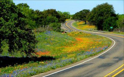 Wildflower Road Show