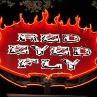 Red Eyed Fly